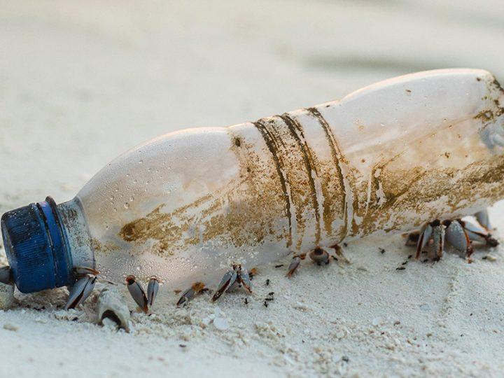 The Anti-Plastic Revolution | An RBC webinar presented by Felix Gummer